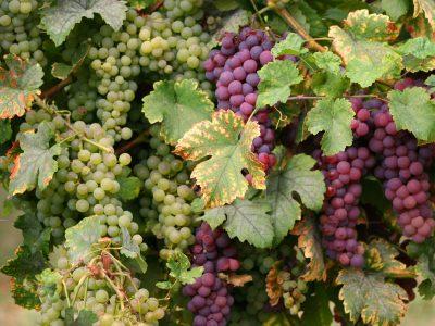 wine-3657269_1920